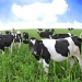 Laktoseintoleranz: Pflanzliche Alternativen zur Milch