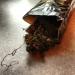 Jiaogulan Tee: Das Kraut der Unsterblichkeit