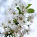 Pollenallergie – Schutz in den eigenen vier Wänden