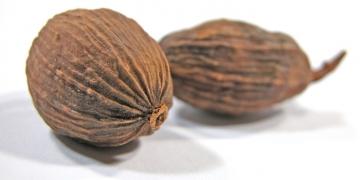 M – Muskat (Myristica fragrans), das Gold Ostindiens [Gewürze ABC]