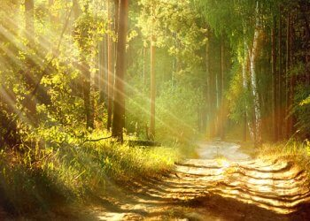 Mindfulness: Das Glück des Moments!