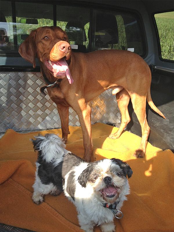Hunde Ausflug
