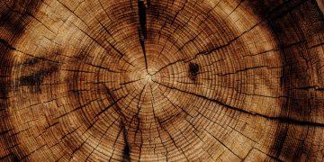 Element Holz Leber